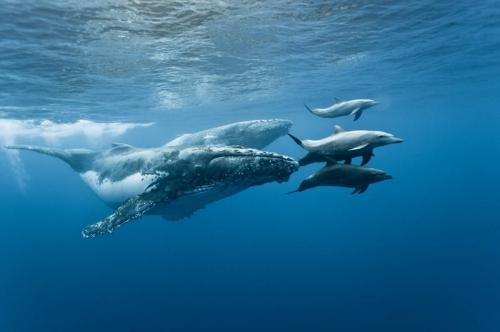 baleines et dauphins.jpg