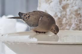 oiseau s'abreuvant.jpg