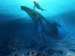 chants des baleines.jpg