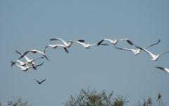 vols d'oiseaux.jpg