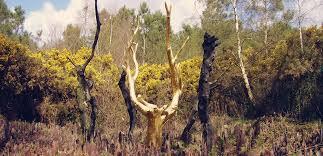 l'arbre d'or.jpg