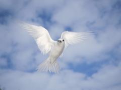 Oiseau blanc.jpg